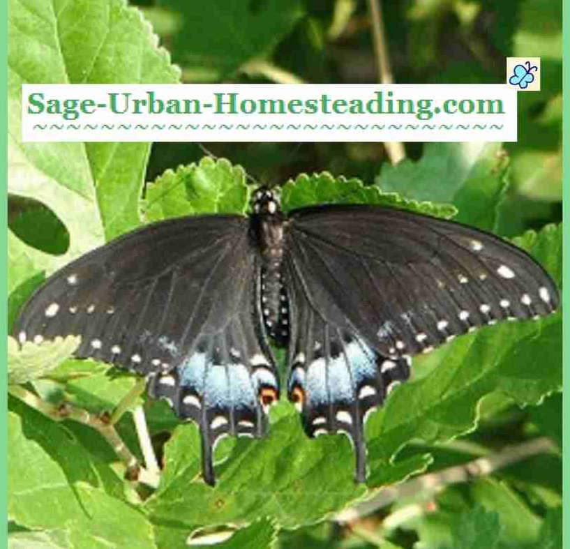 sage-ubran-homesteading.com