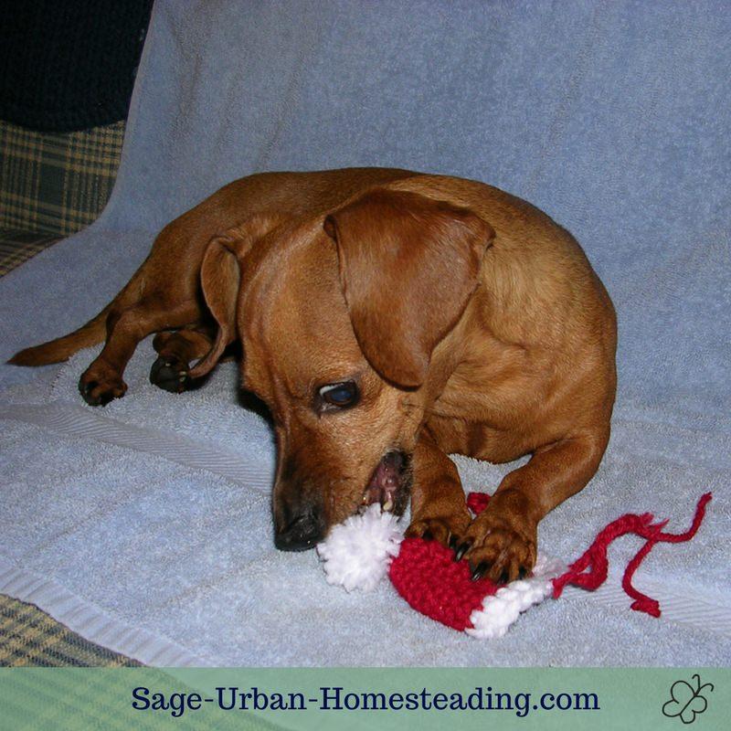 dog chewing a crochet Santa hat