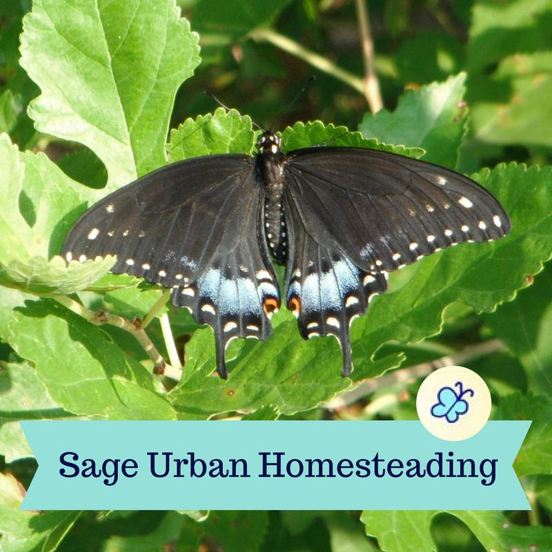 Sage Urban Homesteading