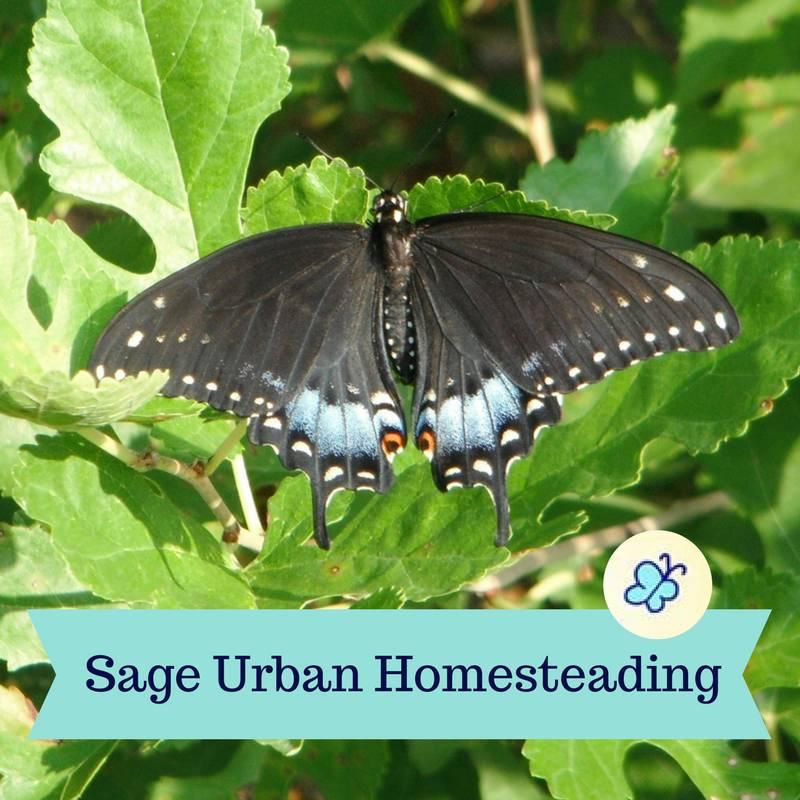 Sage Urban Homesteading