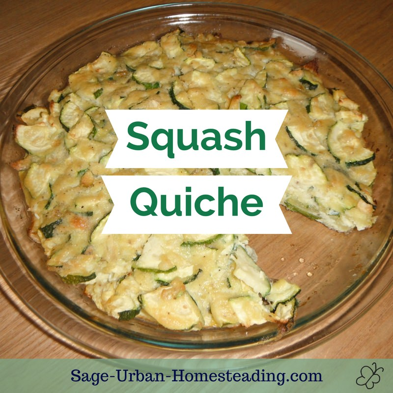 homemade squash quiche