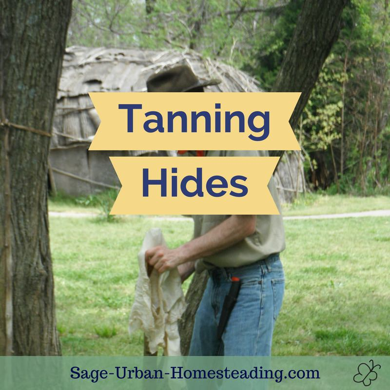 tanning hides