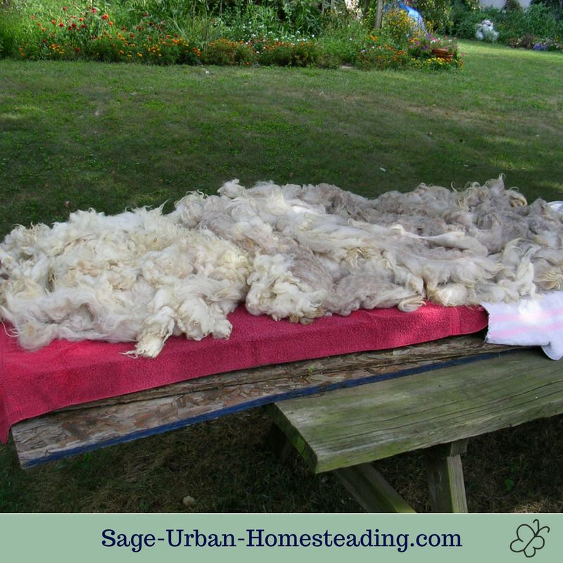 sheep fleece