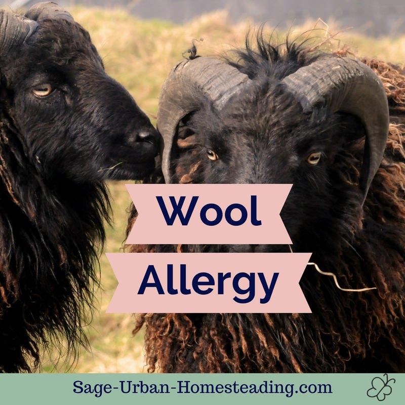 wool allergy