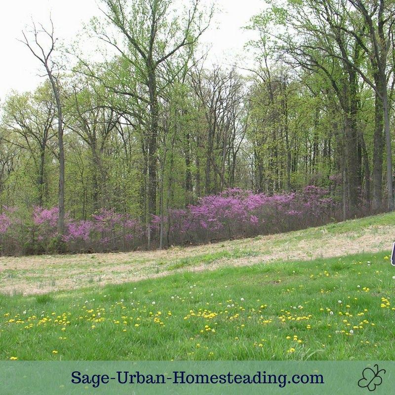 Gettysburg springtime field