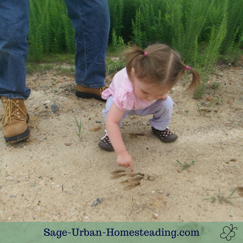 animal tracking toddler