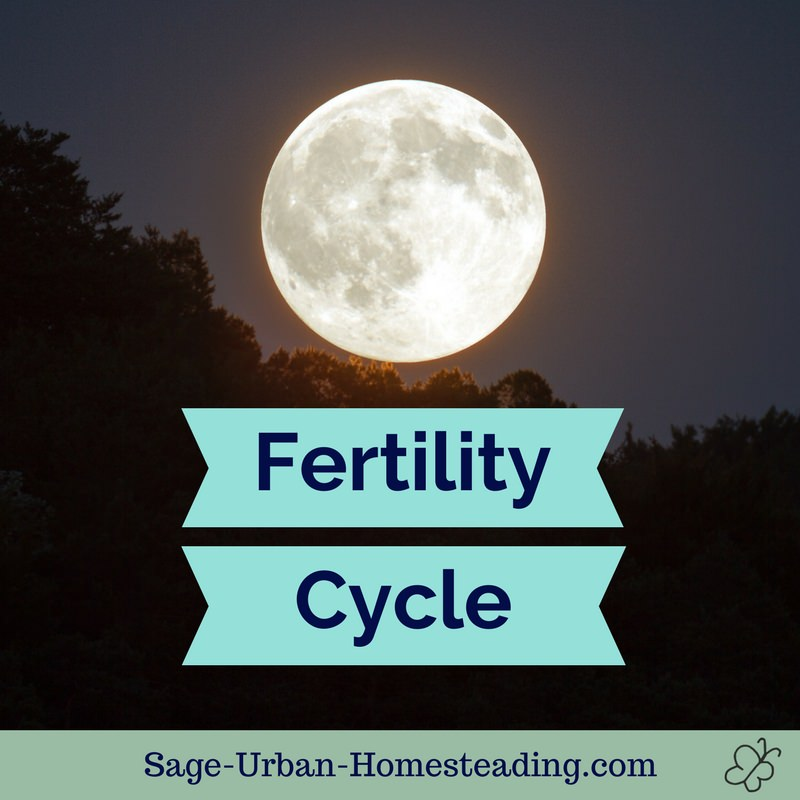 fertility cycle and the moon