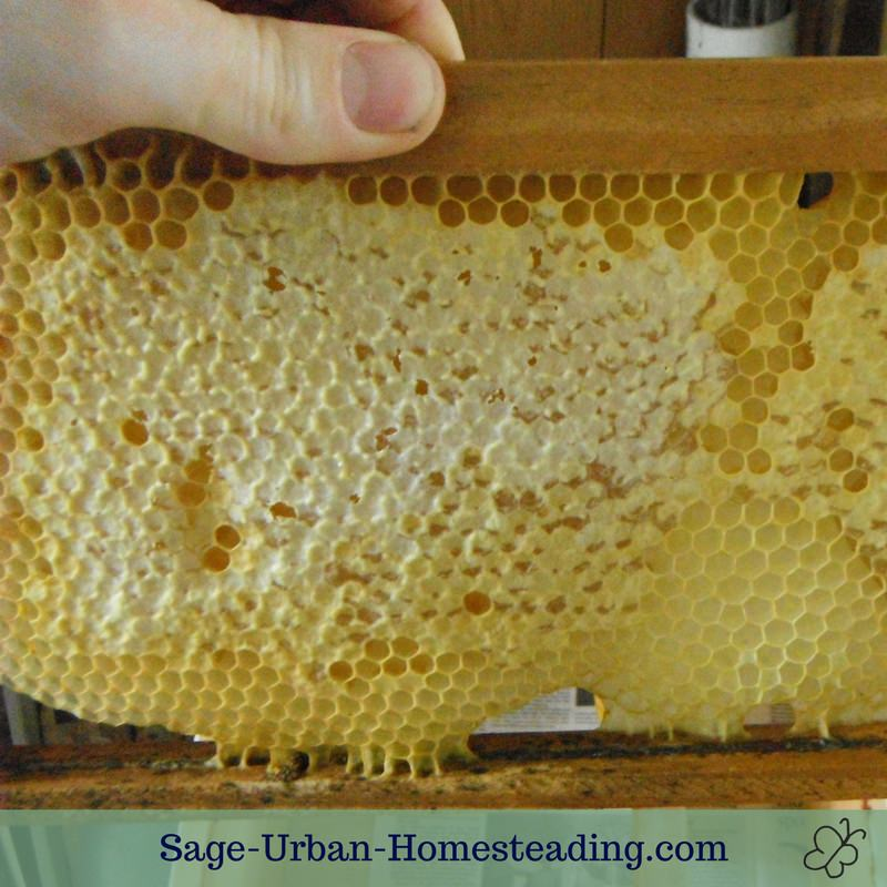 raw honey in the honeycomb frame
