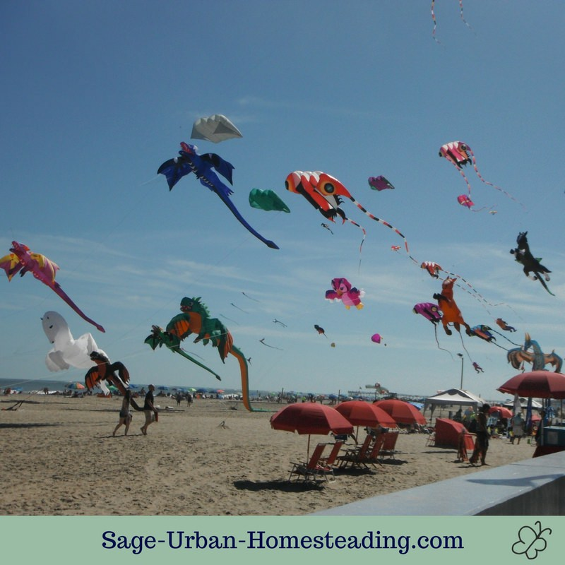 kite festival beach