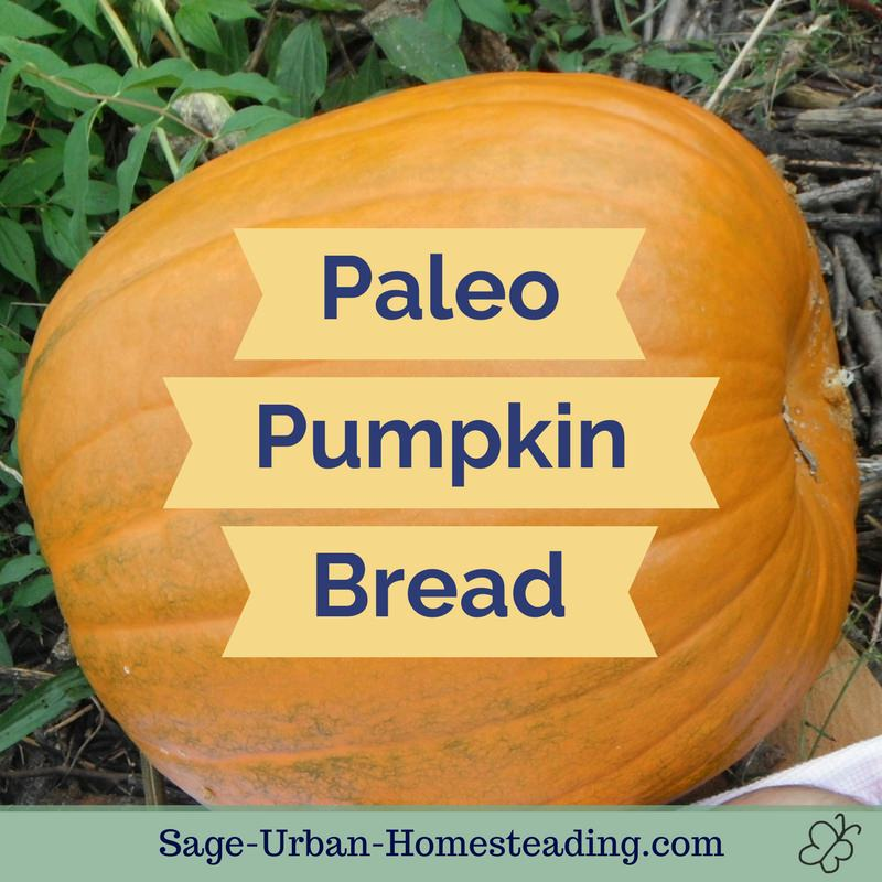 Paleo Muffins with Coconut Flour