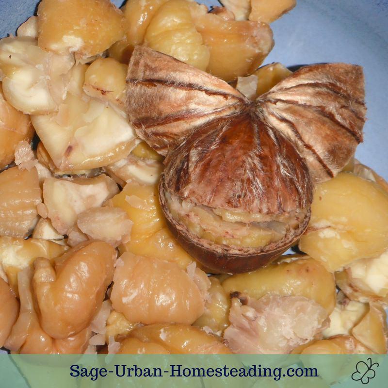 fun peeling chestnuts