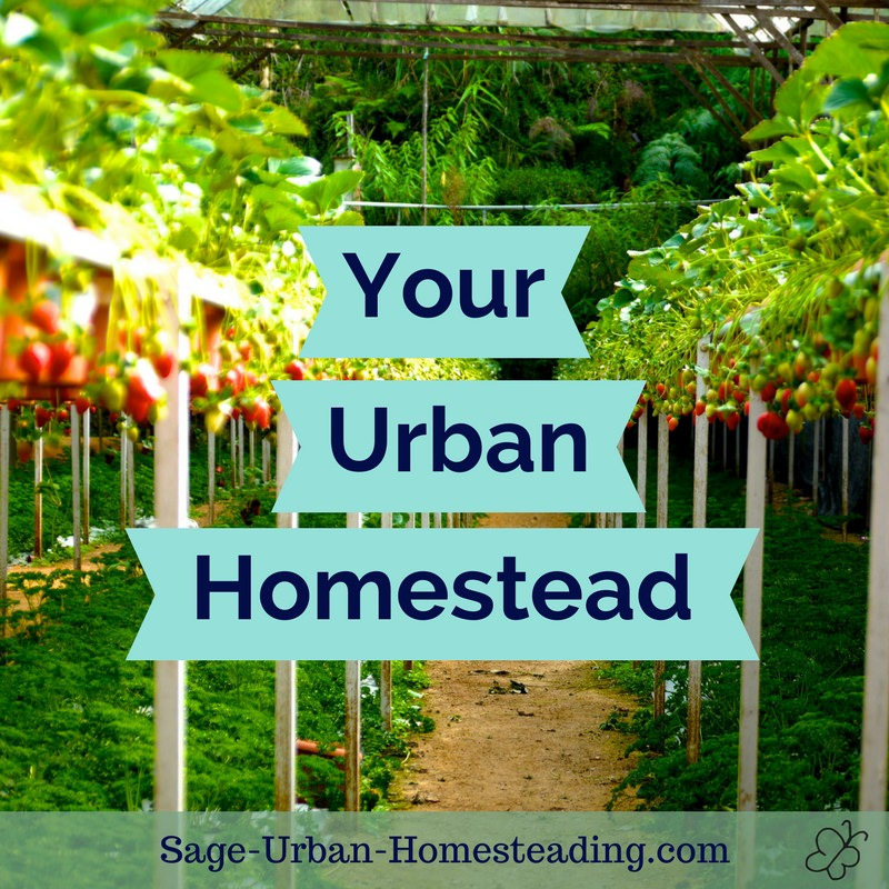 Urban Homestead Photos and Stories