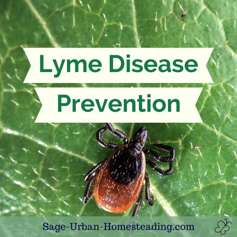 Lyme disease prevention