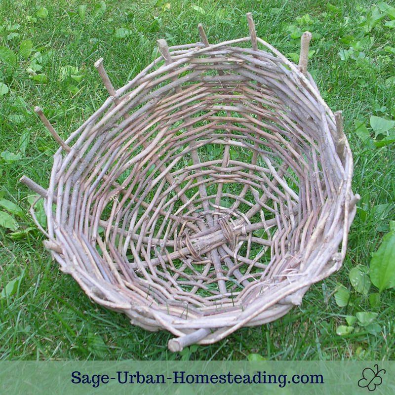 wisteria basket