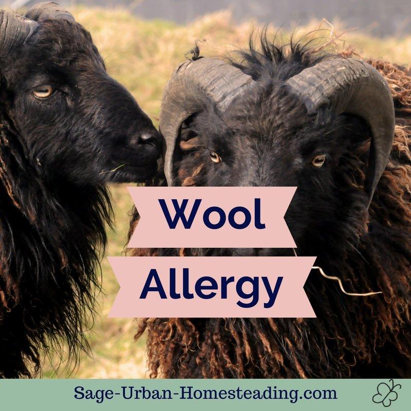 wool allergy