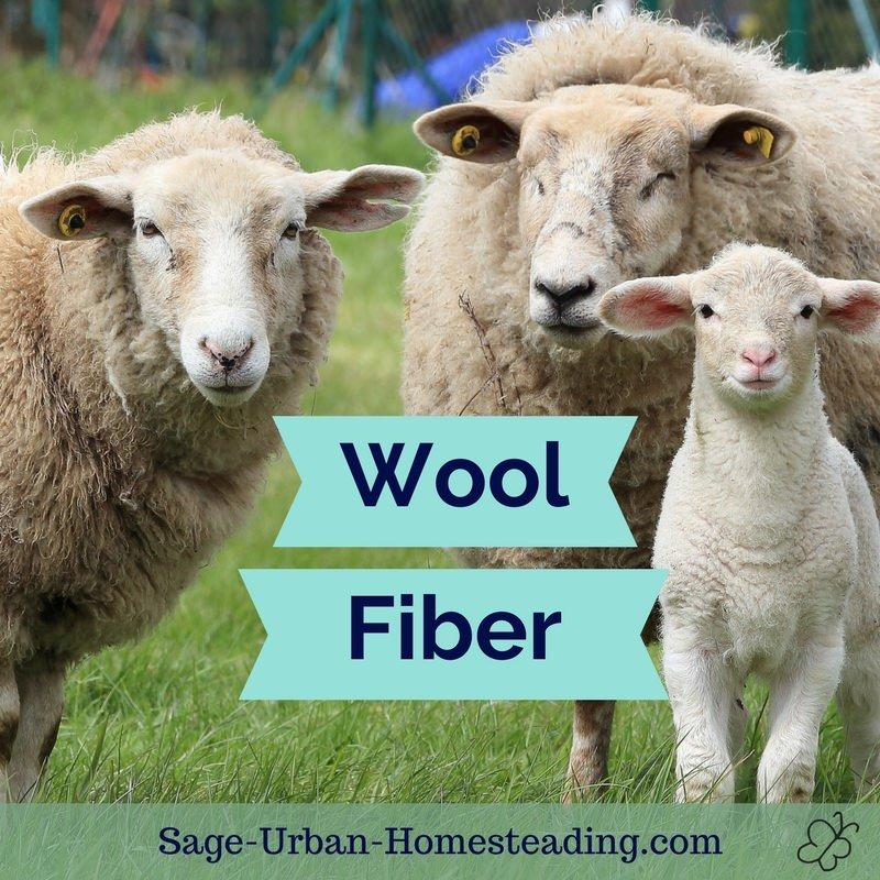 wool fiber